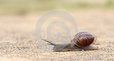 Rapidly moving snail