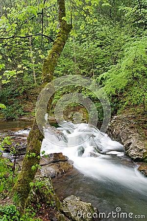 Rapids along a stream