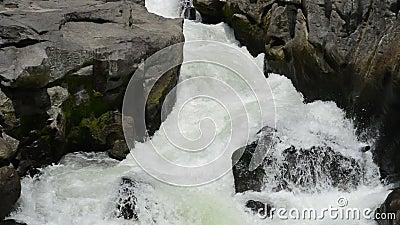 Rapids vita flod stock video