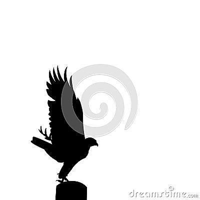 Raptor silhouette