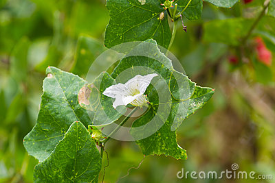 Rare asian flower