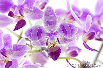 Rare orchid backgound