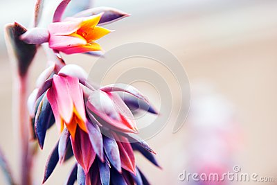 Rare Tropical Flower