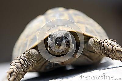 Rare turtle