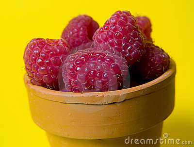 Rasberries en crisol