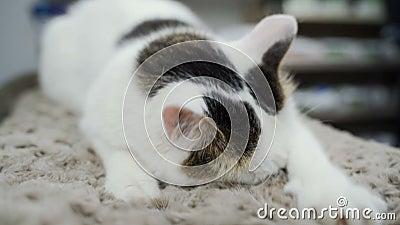 Rasgu?o del gato Garras en el poste de rasguño metrajes