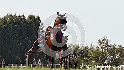 Rasisera häst med en jockey arkivfilmer