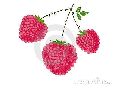 Raspberries with stem