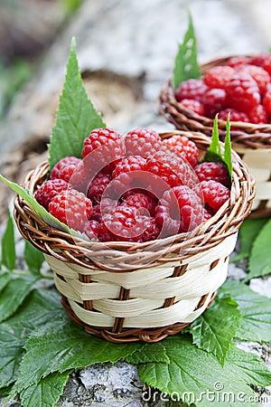 Free Raspberry Baskets Royalty Free Stock Photos - 32894968
