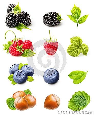 Raspberry, Blackberry,Blueberry and Hazelnuts
