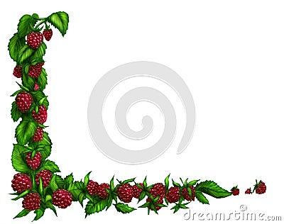 Raspberry border