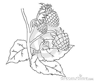 Raspberry sketch