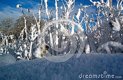 Raspberry in winter