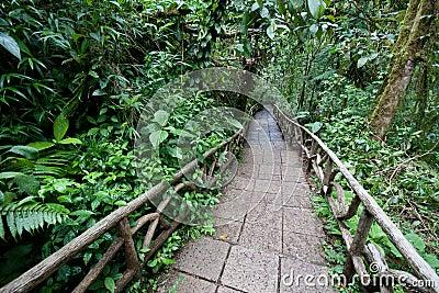 Rastro a través de la selva tropical