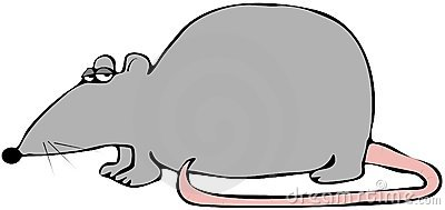 Rat avec un arrière rose
