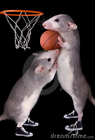 Rat Basketball Royalty Free Stock Images - Image: 10102749