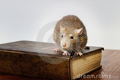Rat on book