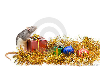 Rat with Christmas presents
