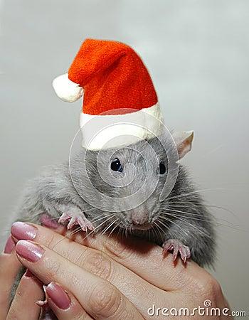 Rat dans le chapeau du p re no l d 39 an neuf image libre de for Achat dans du neuf