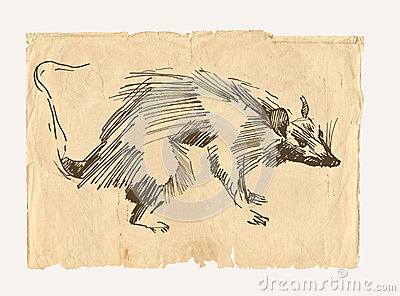 Rat drawing on old paper