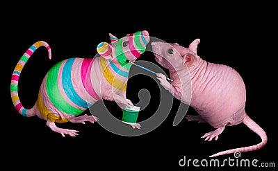Rat painting friend