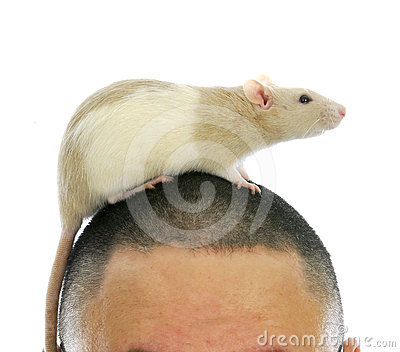 Rat on person s head