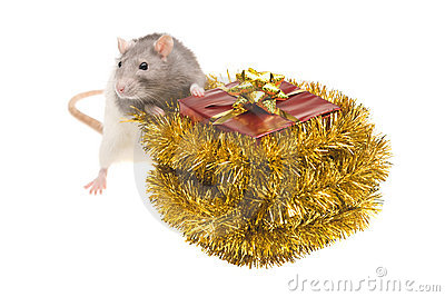 Rat and present with gold bow