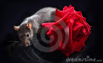 Rat and rose