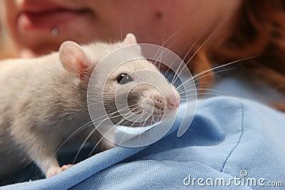 Rat on the shoulder