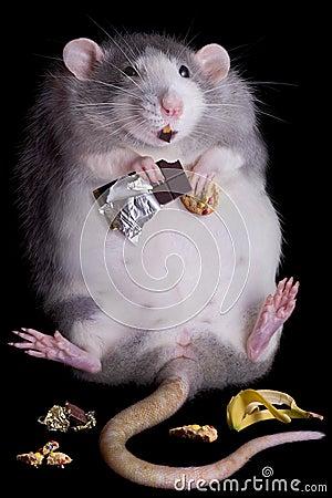 ratas comen basura chatarra