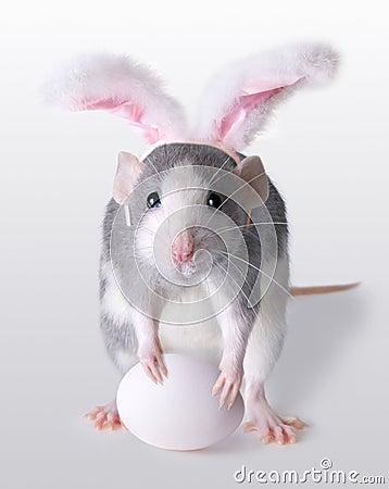 Rato de Easter