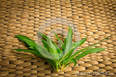 Rattan weave with plant.