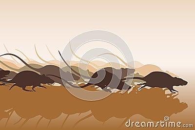 Rattenrennen