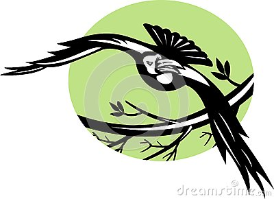 Raven bird flying with branch