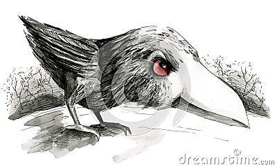 Raven chick