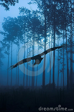 Free Raven Flying Through Night Forest Stock Photography - 6601922