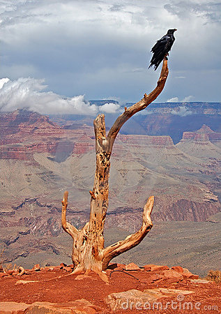 Free Raven Guarding The Trail Stock Photos - 11147963