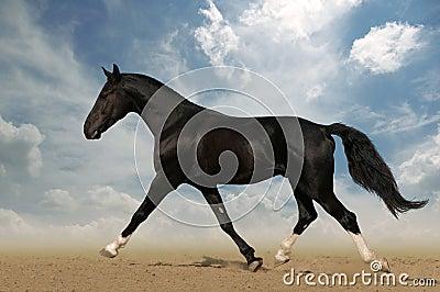 Raven horse in the desert