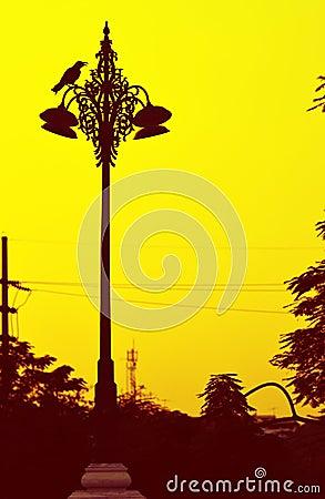 Raven on streetlamp.