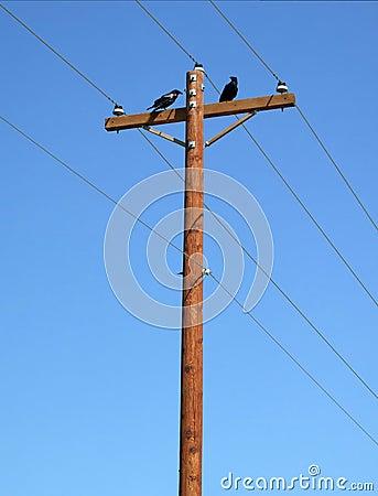 Ravens on pole