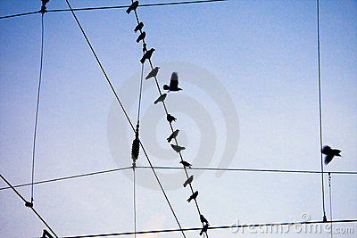 Ravens sitting on wire