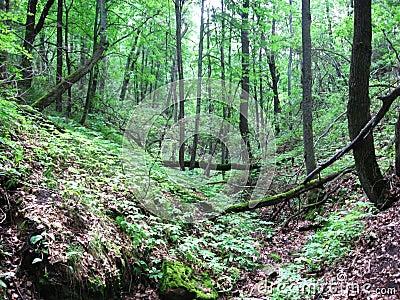 Ravine in forest.