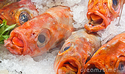 Raw fish in ice