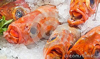 Raw fish in ice