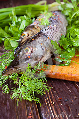 Free Raw Fish Pike On The Board And Greens Royalty Free Stock Photos - 30652508