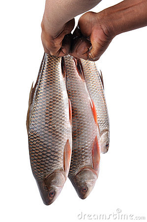 Free Raw Fishes Royalty Free Stock Photo - 11218945