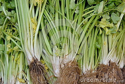 Fresh celery on sale
