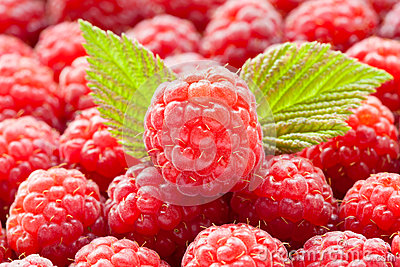 Raw fresh raspberries