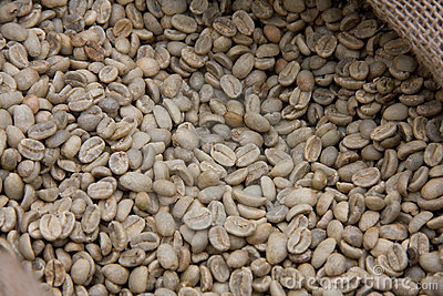 Raw grains of coffee