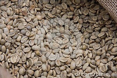 Raw grains of coffee